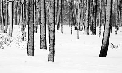 Photograph - Snowy Forest by Arkady Kunysz