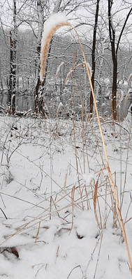 Photograph - Snowy Grass by Michael Porchik