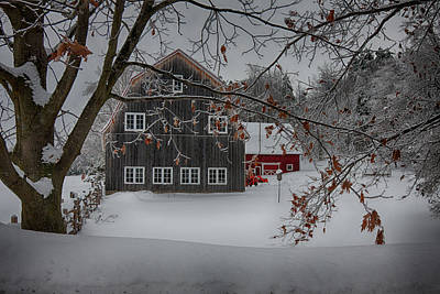 Photograph - Snowy Grey And Red by Jeff Folger