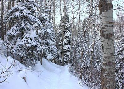 Snowy Hiking Trail Art Print