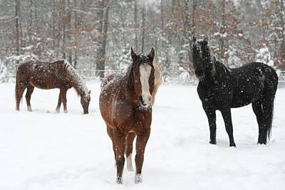 Photograph - Snowy Horses by Kristia Adams
