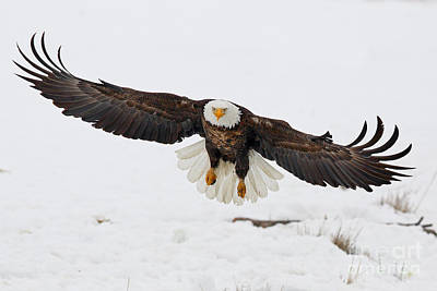 Photograph - Snowy Landing by Bill Singleton