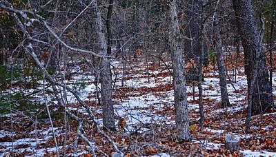 Photograph - Snowy Landscape by Ricardo J Ruiz de Porras