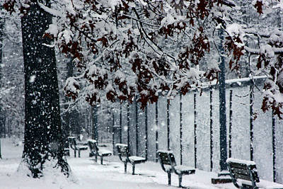 Art Print featuring the photograph Snowy Leaves by Andy Lawless