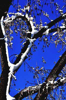 Jerry Sodorff Royalty-Free and Rights-Managed Images - Snowy Limbs 14051 by Jerry Sodorff