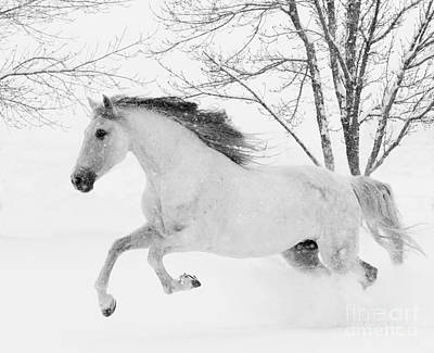 Grey Horse Photograph - Snowy Mare Leaps by Carol Walker