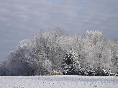 Photograph - Snowy Morning by Michelle Welles