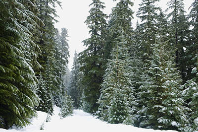 Snowy Mount Hood Forest Art Print by Charmian Vistaunet