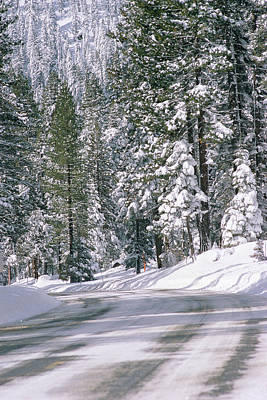 Snowy Mountain Photograph - Snowy Mountain Road With Tall Trees by Panoramic Images