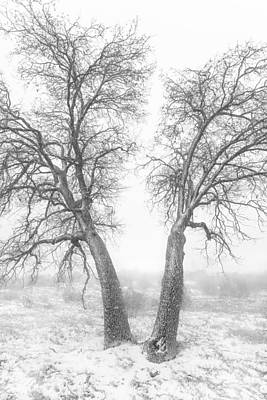 Photograph - Snowy Oaks by Alexander Kunz