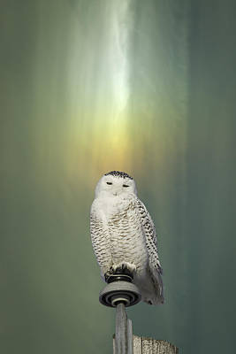 Snowy Owl And Aurora Borealis Art Print