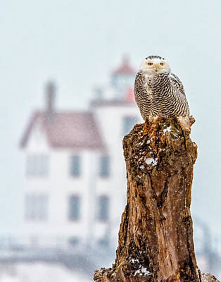 Snowy Owl At The Lighthouse Art Print