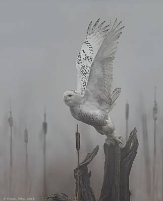 Snowy Owl Blastoff Art Print by Daniel Behm