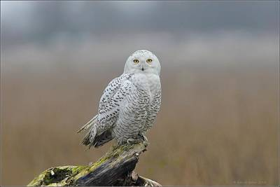 Art Print featuring the photograph Snowy Owl  by Daniel Behm