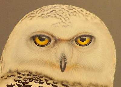 Painting - Snowy Owl by Darren Robinson