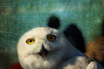 Snowy Owl Art Print by Denyse Duhaime