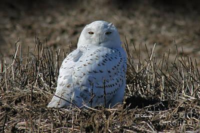Photograph - Snowy Owl by E B Schmidt