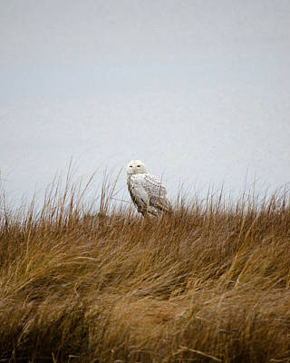 Art Print featuring the photograph Snowy Owl by Gary Wightman