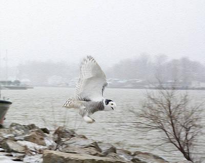 Charlotte Fine Art Photograph - Snowy Owl In Flight 2 by Tracy Winter
