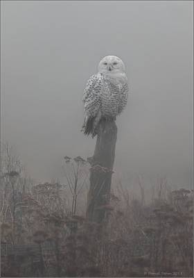 Snowy Owl  In The Mist Art Print