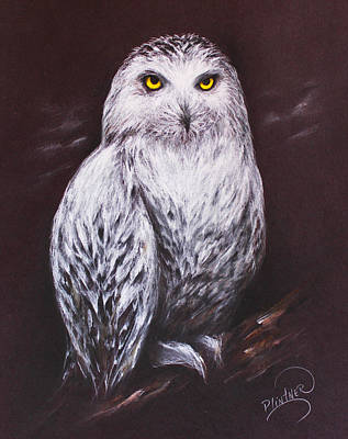 Art Print featuring the drawing Snowy Owl In The Night by Patricia Lintner