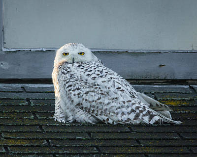 Mannequin Dresses - Snowy Owl by Kimberly Kotzian