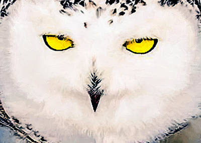 Painting - Artic Snowy Owl Painting by Bob and Nadine Johnston