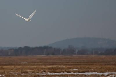 Photograph - Snowy Owl by Paul Treseler