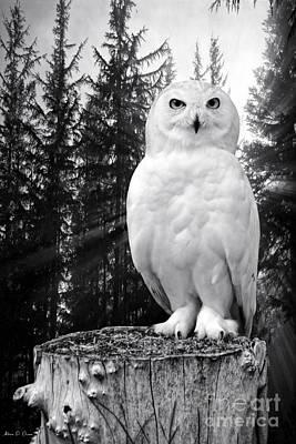 Photograph - Snowy  by Adam Olsen