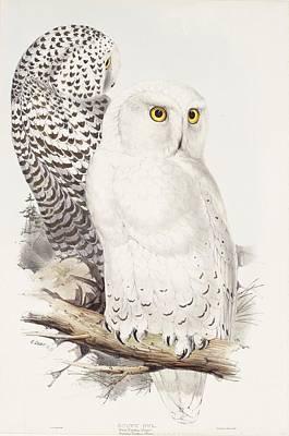 Snowy Trees Drawing - Snowy Owl by Edward Lear