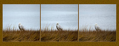 Snowy Owl Triptych Art Print by Crystal Wightman
