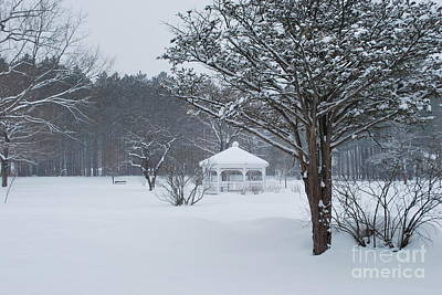 Photograph - Snowy Park by Terri Oberg