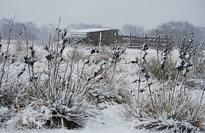 Photograph - Snowy Pasture by Melany Sarafis