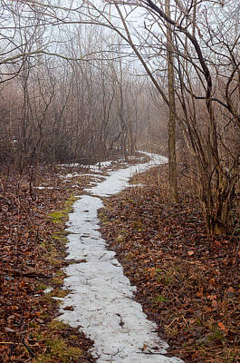 Photograph - Snowy Path by Celso Bressan