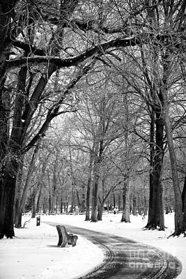 Photograph - Snowy Path by John Rizzuto