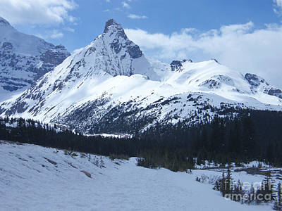 Photograph - Snowy Peaks - Icefields Parkway - Canada by Phil Banks
