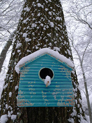 Photograph - Snowy Perch by Richard Reeve