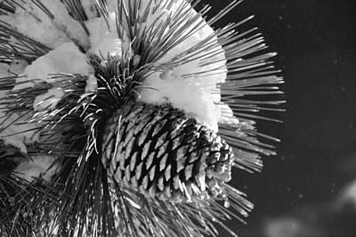 Photograph - Snowy Pinecone by Eric Tressler