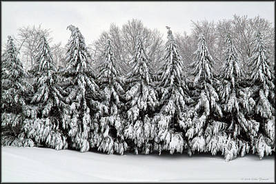 Photograph - Snowy Pines by Erika Fawcett