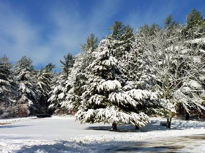 Photograph - Snowy Pines by Janice Drew