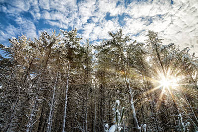 Photograph - Snowy Pines With Sunflair by Brian Boudreau