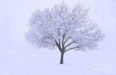 Photograph - Snowy by Rima Biswas