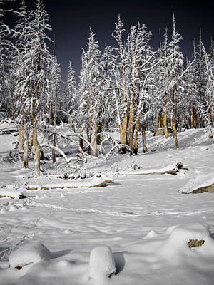 Snowy Silence Print by Chris Brannen