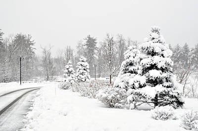 Photograph - Snowy Snow Scene by Staci Bigelow