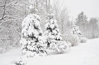 Photograph - Snowy Snow Storm by Staci Bigelow