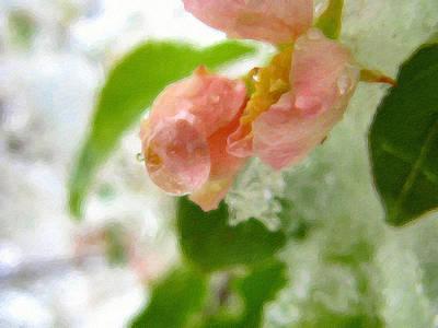 Photograph - Snowy Spring 3 - Digital Painting Effect by Rhonda Barrett