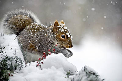 Christmas Holiday Scenery Photograph - Snowy Squirrel by Christina Rollo
