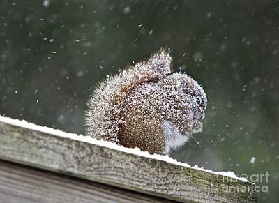 Snowy Squirrel Art Print by Karin Pinkham
