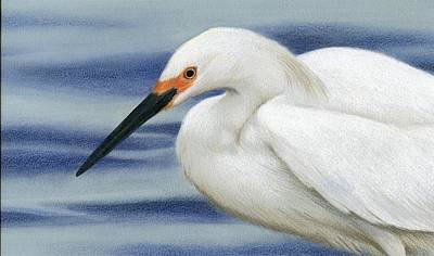 Egret Drawing - Snowy Summer by Heather Mitchell