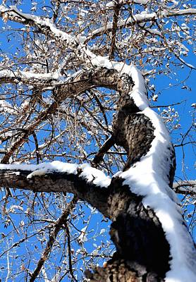 Jerry Sodorff Royalty-Free and Rights-Managed Images - Snowy Tree 14041 by Jerry Sodorff